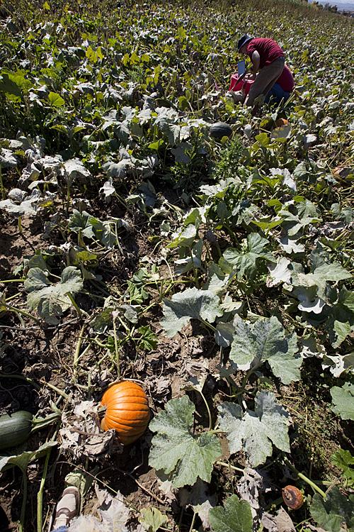 http://www.sparkfun.com/images/newsimages/pumpkin-S.jpg